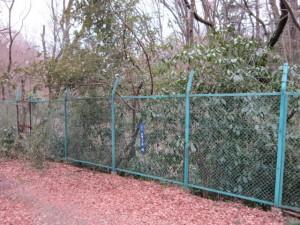 え...山だたぁ... 武蔵野の道・多摩湖コース|くまさんとチャリ
